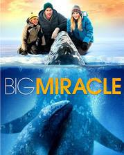 Movie Big Miracle
