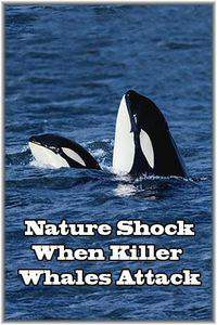 Nature Shock When Killer Whales Attack