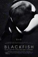 Movie Blackfish