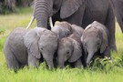 Earth Focus: Illicit Ivory