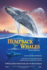 Movie Humpback Whales