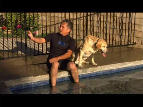 Dog Whisperer Watch Online Free Full Episodes